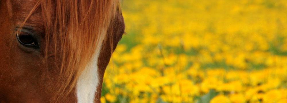 Ausbildung für Reiter und Pferd